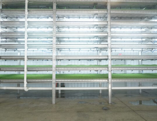 Commercial-scale indoor growing of fresh livestock feed takes a greener, cleaner turn